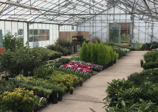 Plant Nursery West Midlands