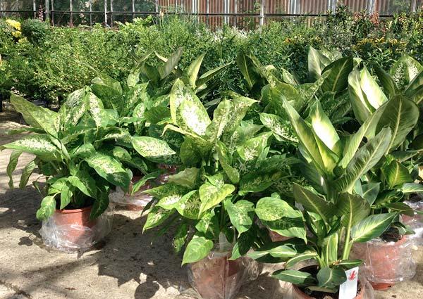 Plant Nursery West Midlands